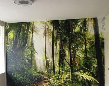 Kundenfoto: El Yunque Puerto Rico von Dennis van de Water