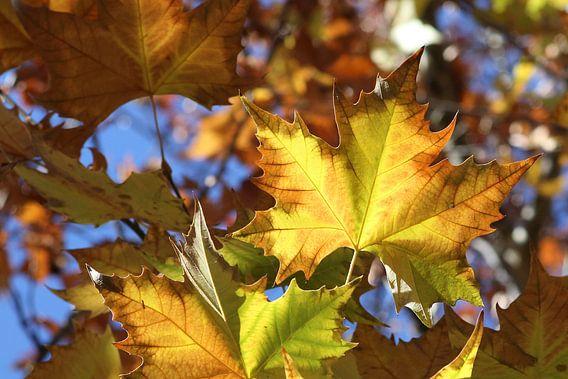 Autumn Started van Cornelis (Cees) Cornelissen