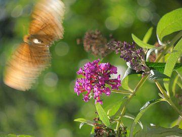 Vladderende Vlinder  van Lin McQueen
