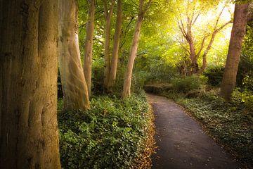 Park in Medemblik von Karel Ton