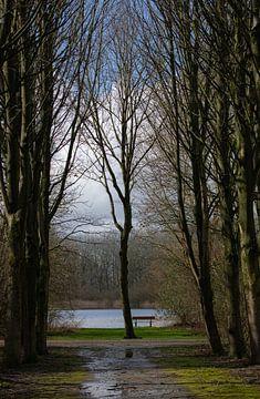 Bankje tussen Bomen van Petro Luft