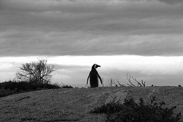 Pinguin van Lisa Stelzel