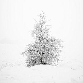 Een eenzaam boompje in de sneeuw. van Jim De Sitter