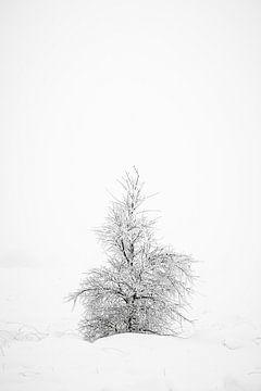 Ein einsamer kleiner Baum im Schnee. von Jim De Sitter