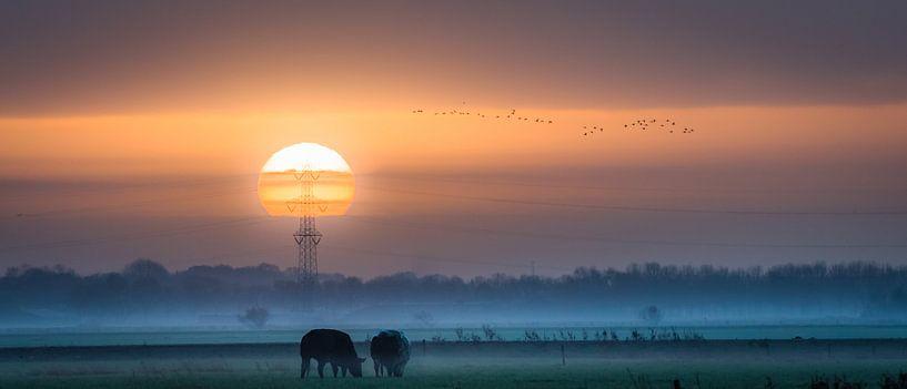 Pure solar power van Ingeborg Ruyken