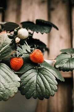 Aardbeien op een tak van Dennis  Georgiev