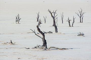 Deadvlei Namibië von Peter Moerman