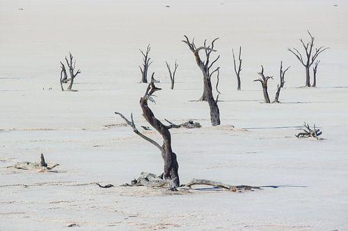 Deadvlei Namibië van