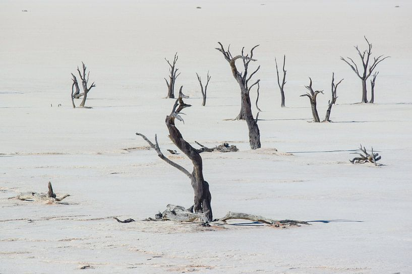 Deadvlei Namibië van Peter Moerman