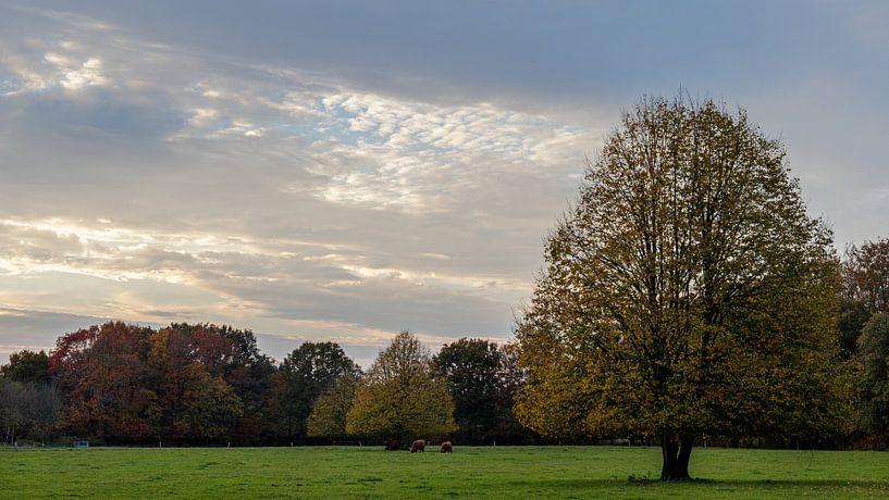 Paysage d'automne sur Anjo ten Kate