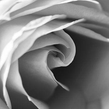 Quadratisches Bild des Herzens einer Rose in Schwarz und Weiß von Shotsby_MT