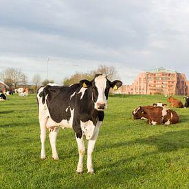 Koe in de wei van Marijke van Eijkeren