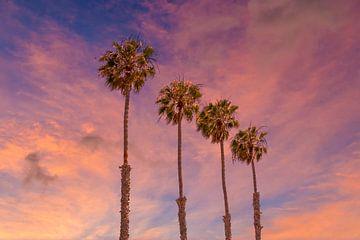Sonnenuntergang mit Palmen von Melanie Viola