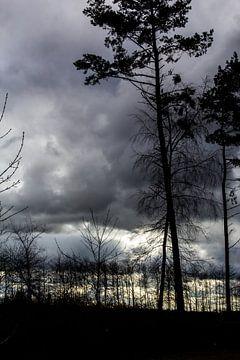 Bomen in de licht van een regenbui van Eveline Eijlander