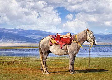 Tibetaanse paard bij bergachtig gebied in de buurt van Qinghai Lake van Tony Vingerhoets