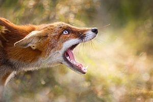 Freaky Fox
