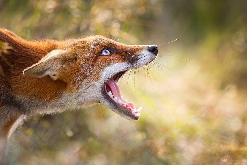 Freaky Fox van Pim Leijen