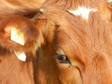 Koeien  van Jellie van Althuis