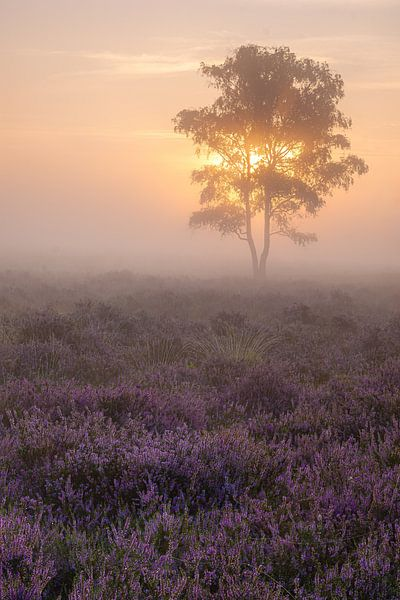 Purple van Jan Koppelaar