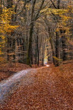 Folgen Sie dem Weg durch den Herbstwald