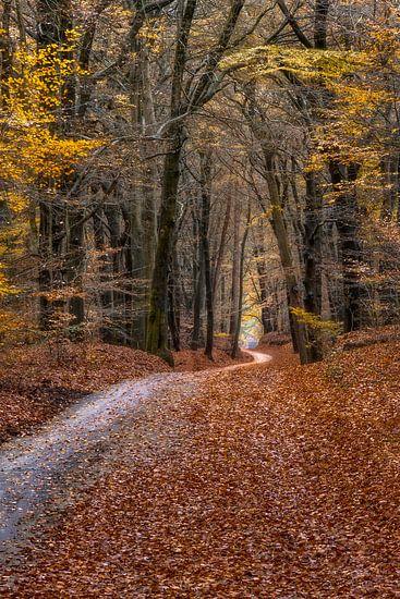 Volg het pad door het herfstbos