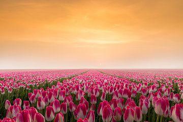 Tulpen in de vroege ochtendzon von Gerda Holla