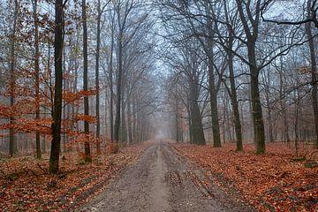 Ein nebliger Herbstmorgen Ende November von Cor de Hamer