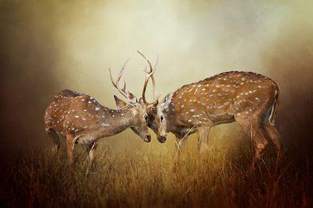 Hert Op Canvas - Vechtende Herten In Mist van Diana van Tankeren