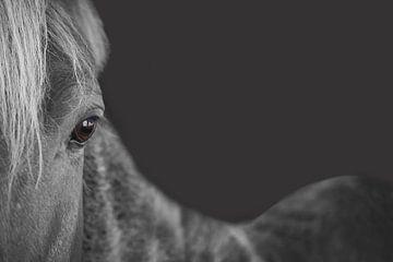 The gray horse von Elianne van Turennout