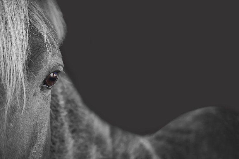 The gray horse van Elianne van Turennout