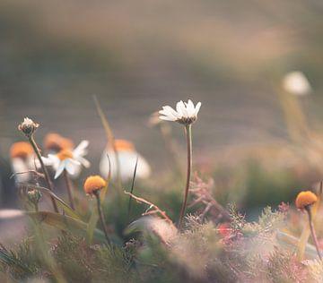 Blumen Teil 109 von Tania Perneel