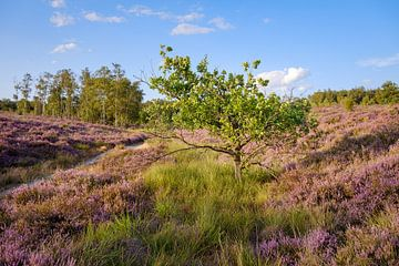 Baum zwischen den Mooren von Johan Vanbockryck