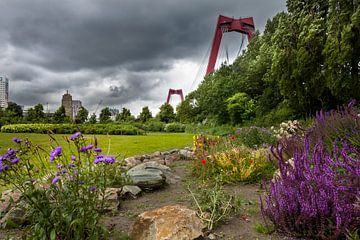 Beautiful Rotterdam - Hef park sur