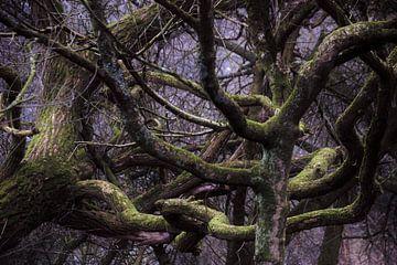 Bomen in de knoop van