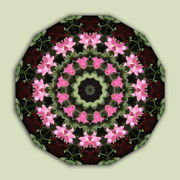 Pink blossoms, Floral mandala-style, Flower Mandala van Barbara Hilmer-Schroeer