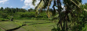 Rijst panorama von Leanne lovink