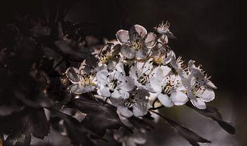 Bloemen van Maurice Cobben