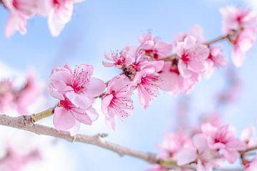 Park der Blütenpracht von Caroline Drijber