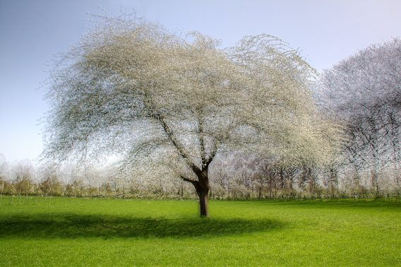 18 pictures of an apple tree