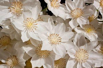 Witte bloemen van Dennis Claessens