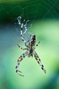 Spider, spider... van Rick Crauwels