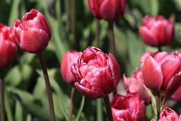 Tulpjes van Pamela Fritschij