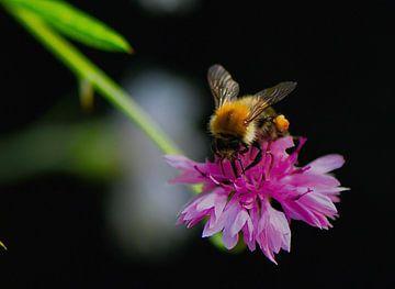 pretty bee von Mieke Verkennis
