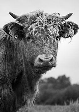 Schotse hooglander in zwart wit. van Dirk Keij-Bron