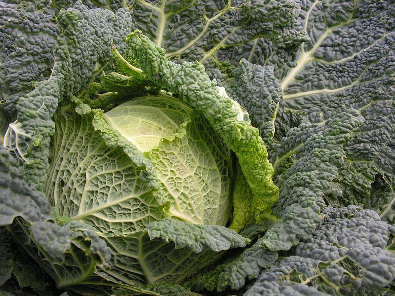 Verse groente. van André Mesker