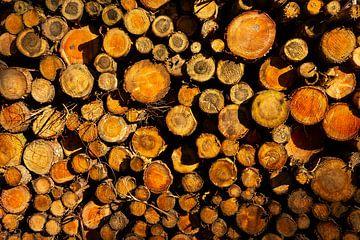 Ein Haufen gehackter Baumstämme durch die Sonne freigelegt. von Bart van Dam