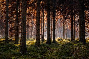 Herfstbos met zonneharpen van Peter Bolman
