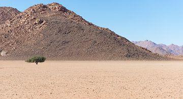 Namibië, eenzame boom van Jeannette Kliebisch