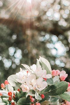 Weiße, rote und rosa Blüten unter dem Sonnenlicht von Dennis  Georgiev