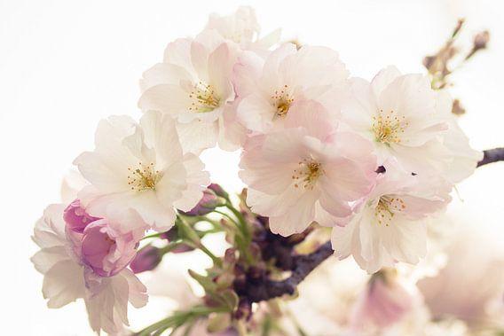 Voorjaar bloesem van Ada Zyborowicz